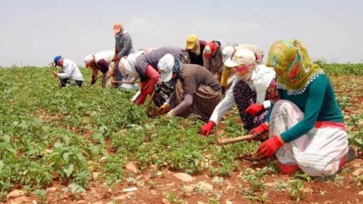 Tarım İşçisinin Ücreti Aylık 180 TL Arttı
