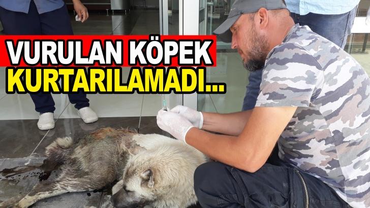 Gaziantep'te vurulan ve aile hekimliğine sığınan köpek kurtarılamadı